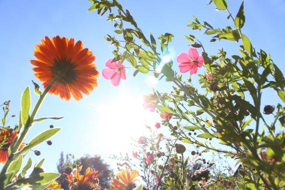 flowers-980162_1280.jpg