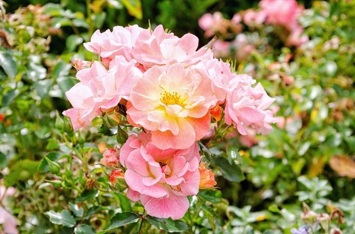 flower-3060309_960_720